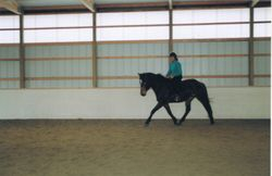 Sparky working trot 4/08