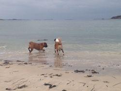 Hunde am Strand von Landeda