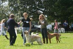 Stourhead Companion Show 3rd place 2 Aug 09