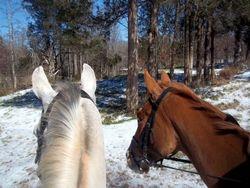Jack & Sleepy on a rare snowy trailride