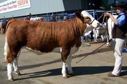 Preparing for the Junior Interbreed