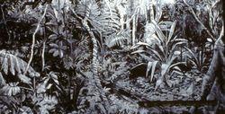 Queensland Jungle