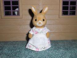 JP Golden Teardrop Rabbit Mother