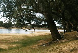 206 Murray River 1958