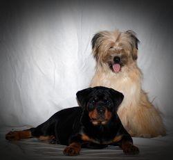 Bezena & Ravi