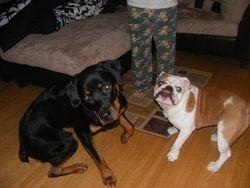 Irwin and Maximus