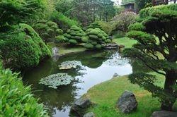 Pond, Japanese Tea Garden