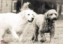 Layla & Daisy