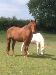 Little and large