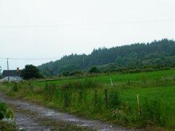 Rathcoole Wood, Millstreet, Co Cork