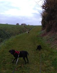 Walking with Heston and Luna