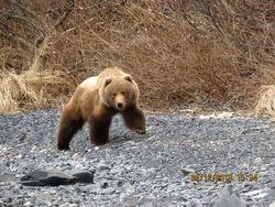 Base Camp Bear