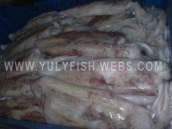 Squid Morocco