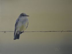 "Western Kingbird (9 by 12"" acrylic on canvas) In Private Collection"