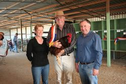 Champion Rooster