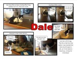 Temp Office Cat Dale