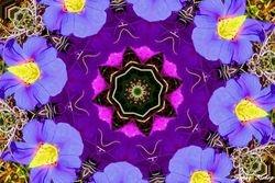 Kaleidoscope Morning Glories