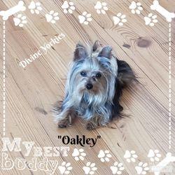 """""""Oakley"""""""