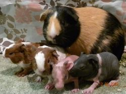 Daisy and her babies