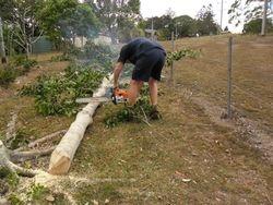 Tree Cutting 4