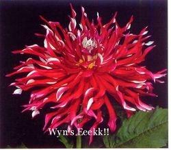 Wyn's Eeekk!! -A weird DR