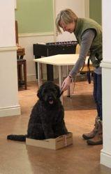 Oscar in the box