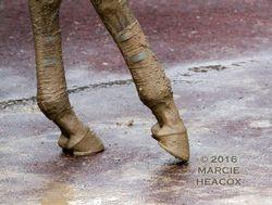 Songbird's Muddy Legs