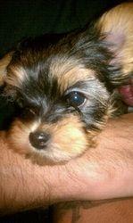Mia, when she was a puppy