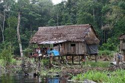 Rio Pacaya / Pacaya-Samiria Reserve