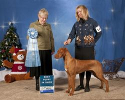 Tex  7 months old-2nd show-Dec 2014-Capella X Doc