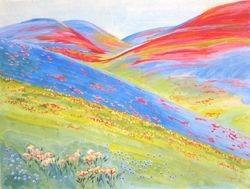 In Roman CA Wild Flower Field