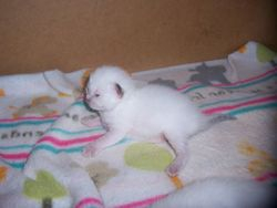 This is star as a baby at 1 and a half weeks old