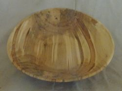 Ambrosia Maple #1853