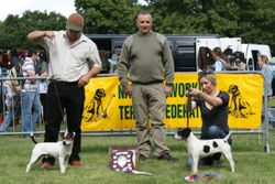 OPEN SHOW BEST RUSSELL (left) & RESERVE.