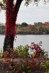 Potomac River- 2012  3