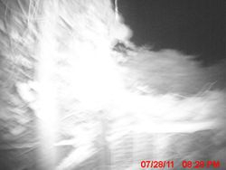 Unknown creature passes stealth camera.