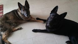 Nutzie and Onyx