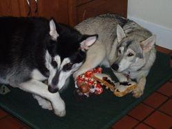 Moley & Tiva