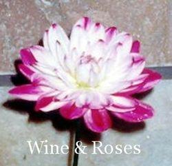 Wine & Roses-WL DB W/Pr