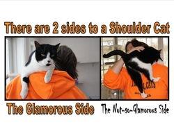 Double Bon, Shoulder Cat