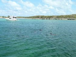 Dolphins around the boat in Great Guana Cay