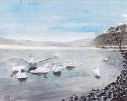 Swans Lake In Morning