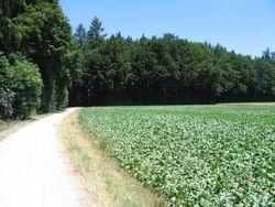 Buggenhout bos en omgeving