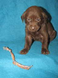 4 Weeks Old - Pink Spots Collar Female