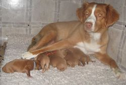 Sky and her babies