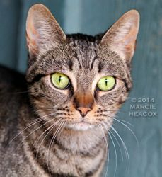 Barn Cat Portrait