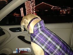 Checking out the Christmas lights