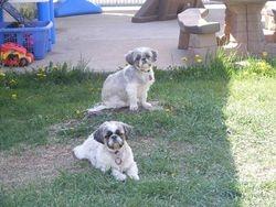 Pugsy and Tiffany