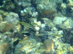 Snorkelling off Peter Island