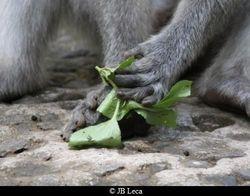 wrap with leaf (Ubud)